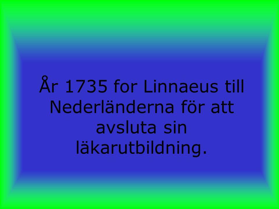 År 1735 for Linnaeus till Nederländerna för att avsluta sin läkarutbildning.
