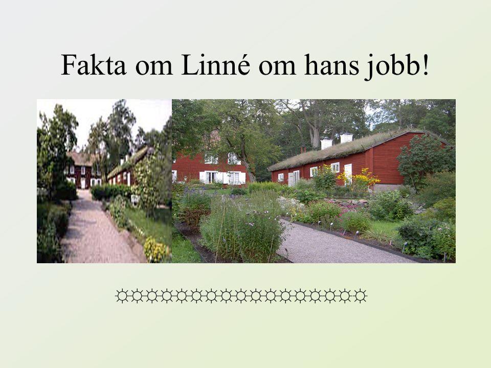 Fakta om Linné om hans jobb!