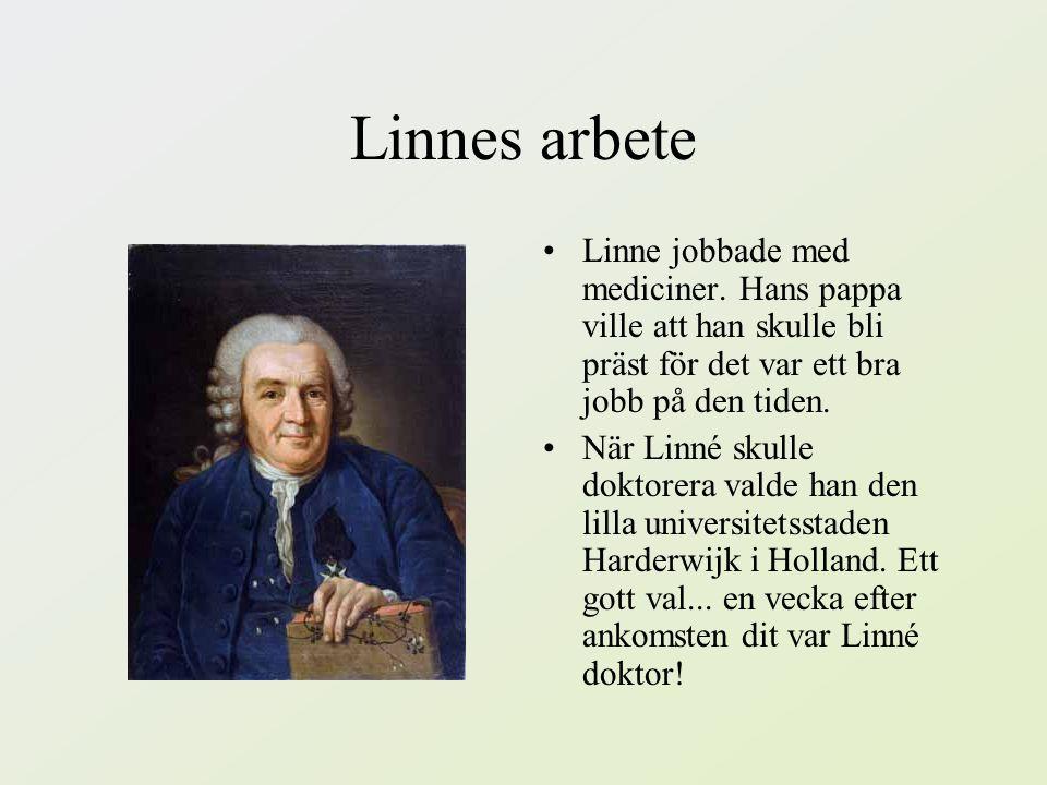 Linnes arbete Linne jobbade med mediciner. Hans pappa ville att han skulle bli präst för det var ett bra jobb på den tiden.