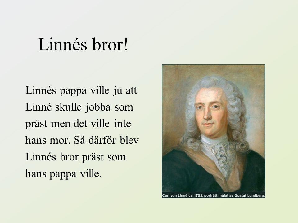 Linnés bror! Linnés pappa ville ju att Linné skulle jobba som