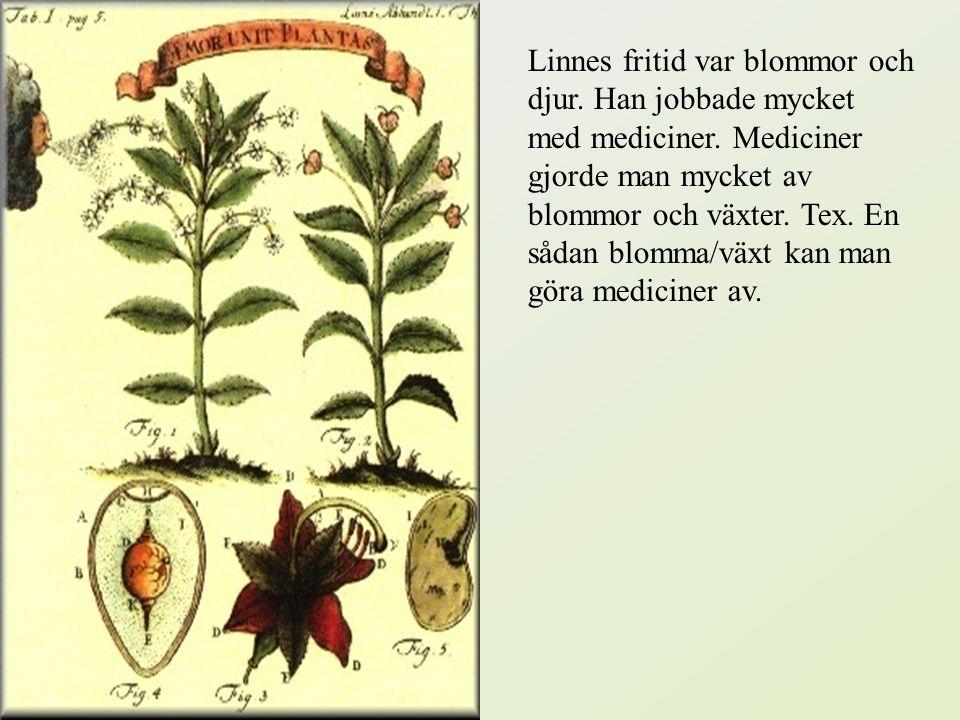 Linnes fritid var blommor och djur. Han jobbade mycket med mediciner