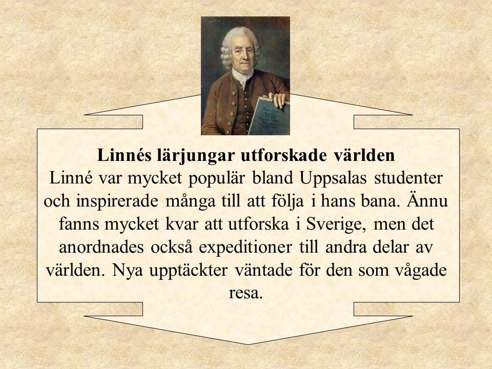 Linnés lärjungar utforskade världen Linné var mycket populär bland Uppsalas studenter och inspirerade många till att följa i hans bana.