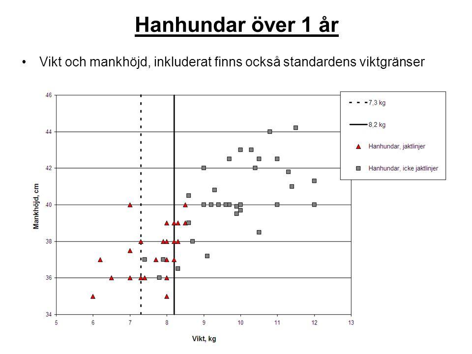 Hanhundar över 1 år Vikt och mankhöjd, inkluderat finns också standardens viktgränser