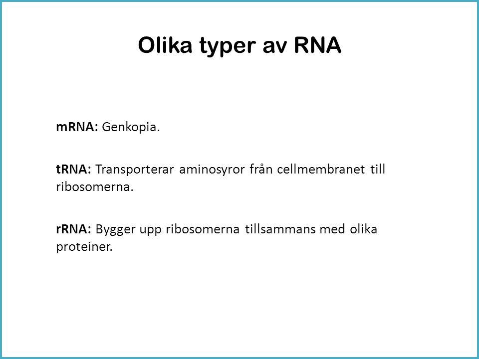 Olika typer av RNA