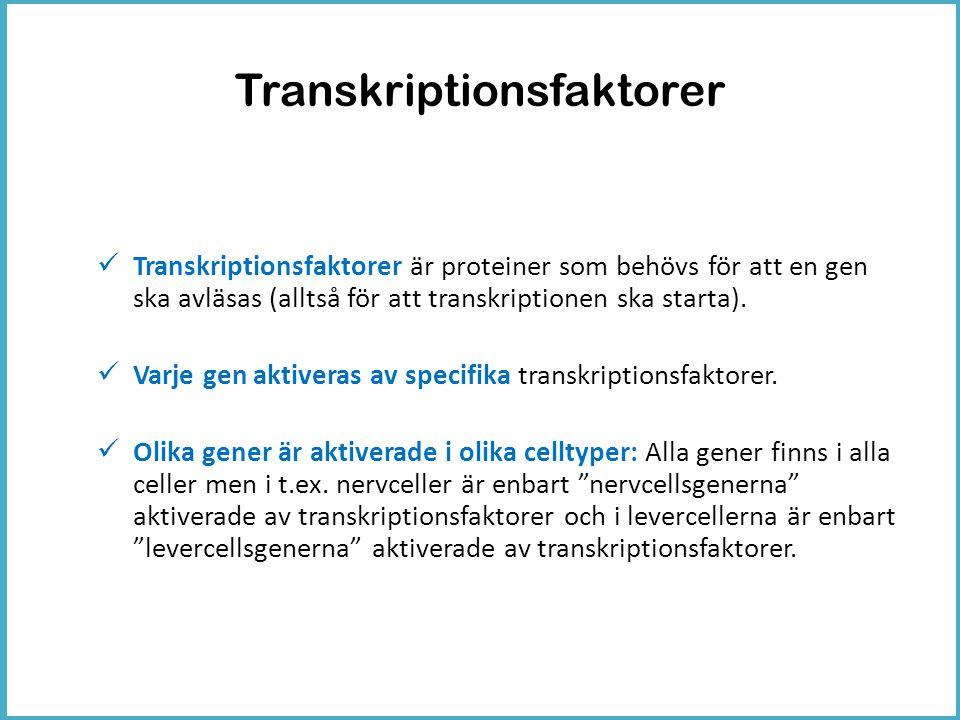 Transkriptionsfaktorer
