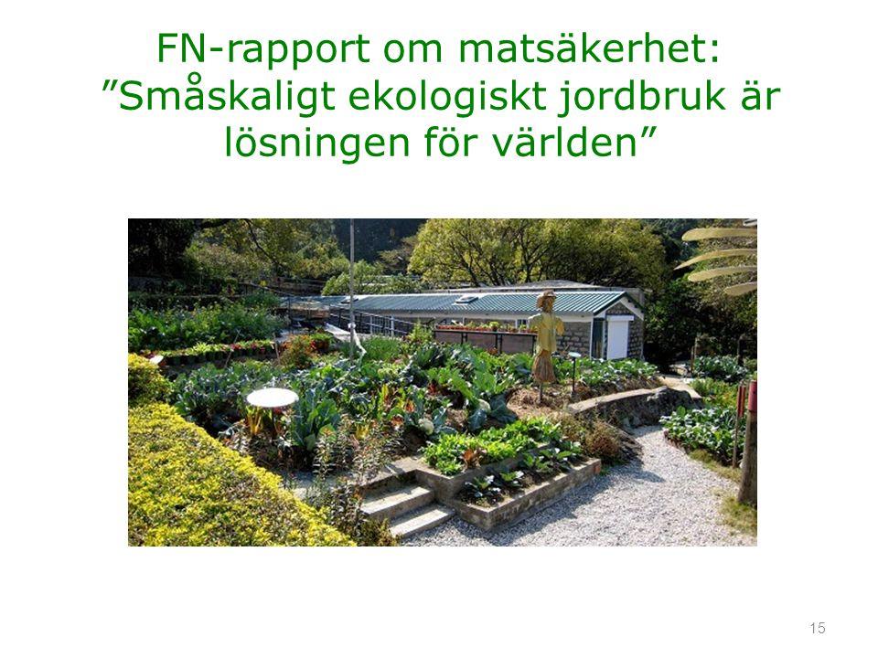 FN-rapport om matsäkerhet: Småskaligt ekologiskt jordbruk är lösningen för världen