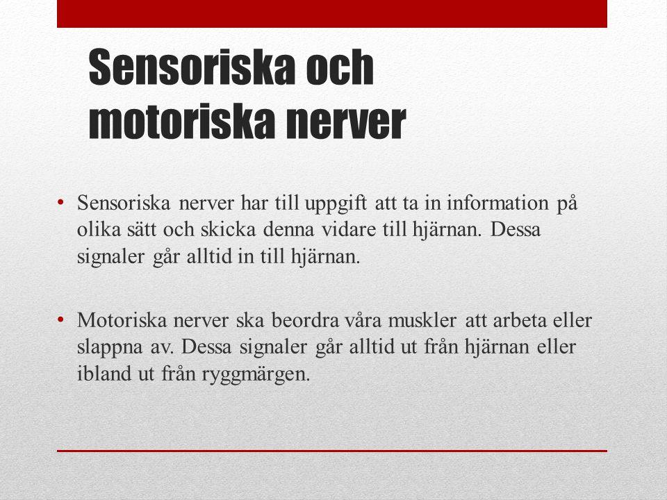 Sensoriska och motoriska nerver