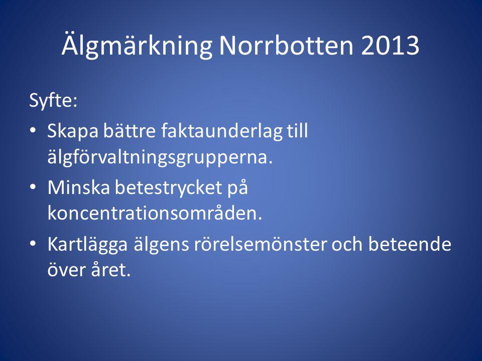 Älgmärkning Norrbotten 2013