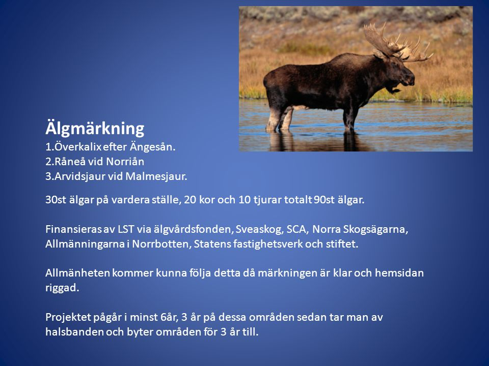 Älgmärkning 1.Överkalix efter Ängesån. 2.Råneå vid Norriån