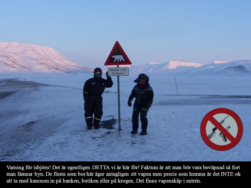 Varning för isbjörn. Det är egentligen DETTA vi är här för