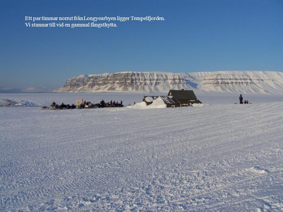 Ett par timmar norrut från Longyearbyen ligger Tempelfjorden.