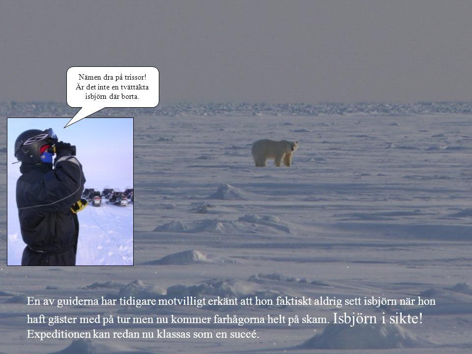 Är det inte en tvättäkta isbjörn där borta.