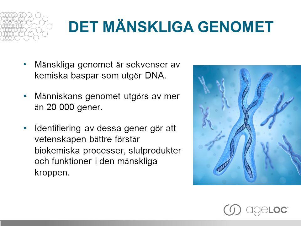 DET MÄNSKLIGA GENOMET Mänskliga genomet är sekvenser av kemiska baspar som utgör DNA. Människans genomet utgörs av mer än 20 000 gener.