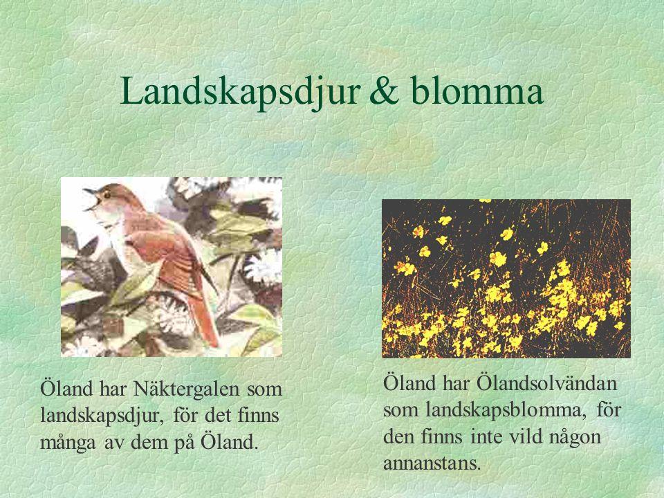 Landskapsdjur & blomma