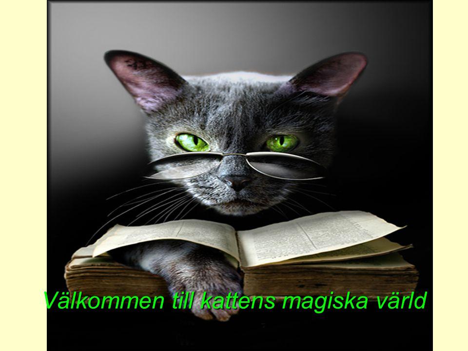 Välkommen till kattens magiska värld