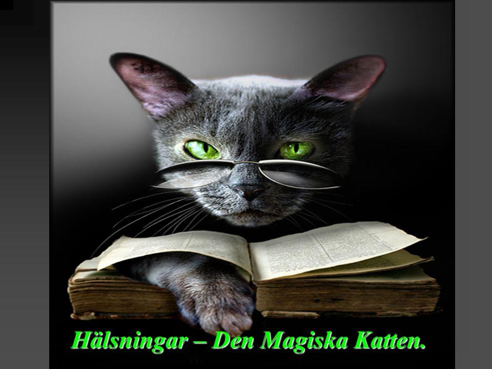 Hälsningar – Den Magiska Katten.