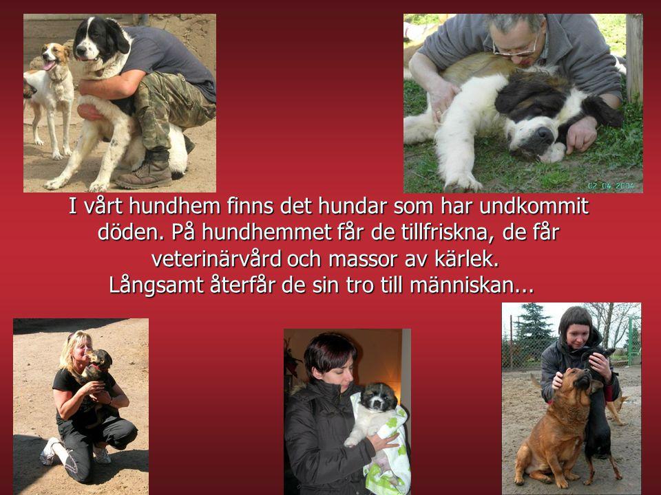 I vårt hundhem finns det hundar som har undkommit döden