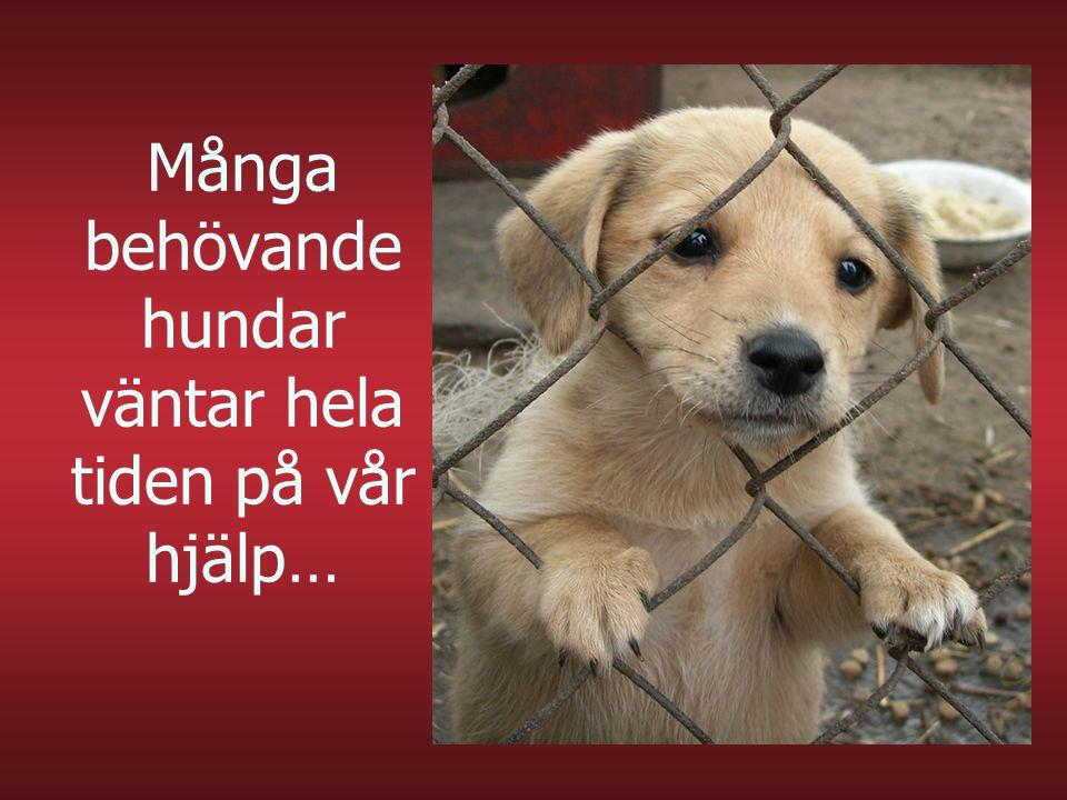 Många behövande hundar väntar hela tiden på vår hjälp…
