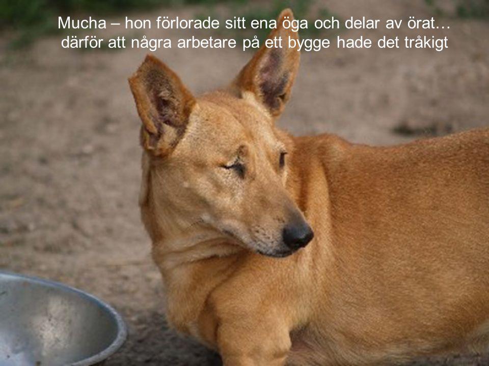 Mucha – hon förlorade sitt ena öga och delar av örat…