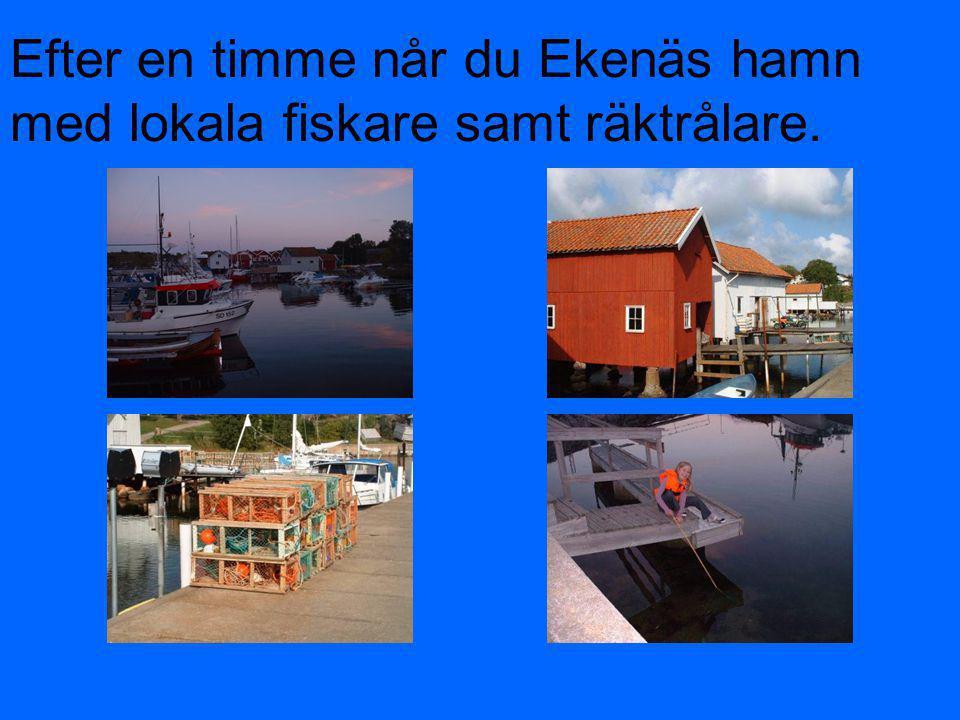 Efter en timme når du Ekenäs hamn med lokala fiskare samt räktrålare.