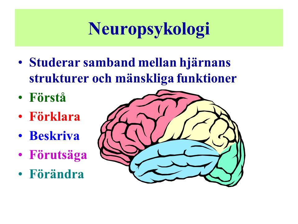 Neuropsykologi Studerar samband mellan hjärnans strukturer och mänskliga funktioner. Förstå. Förklara.