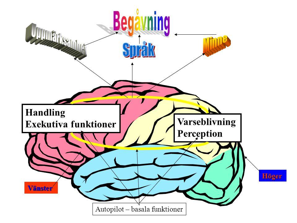 Språk Begåvning Uppmärksamhet Minne Handling Exekutiva funktioner