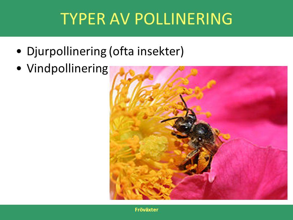 TYPER AV POLLINERING Djurpollinering (ofta insekter) Vindpollinering