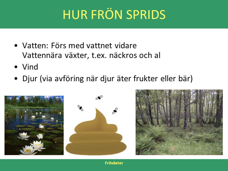 HUR FRÖN SPRIDS Vatten: Förs med vattnet vidare Vattennära växter, t.ex. näckros och al. Vind. Djur (via avföring när djur äter frukter eller bär)