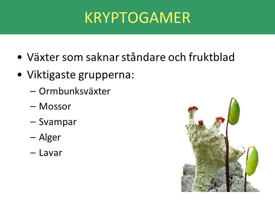 KRYPTOGAMER Växter som saknar ståndare och fruktblad