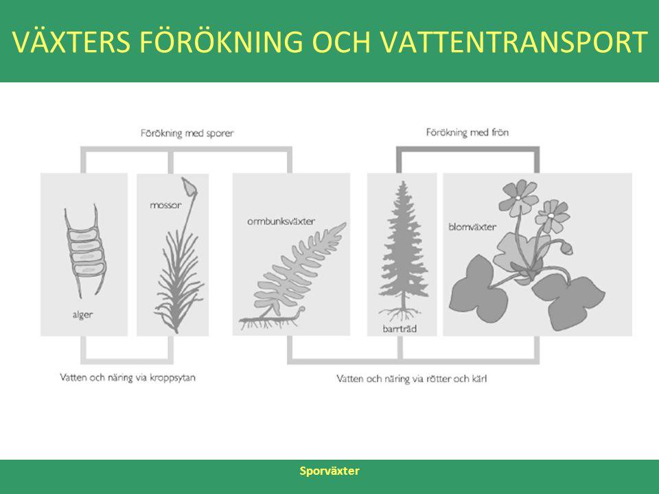 VÄXTERS FÖRÖKNING OCH VATTENTRANSPORT