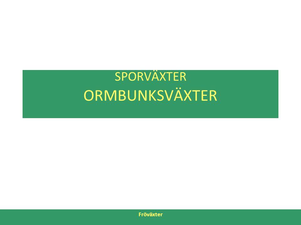 SPORVÄXTER ORMBUNKSVÄXTER