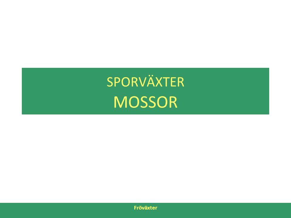 SPORVÄXTER MOSSOR Fröväxter 26