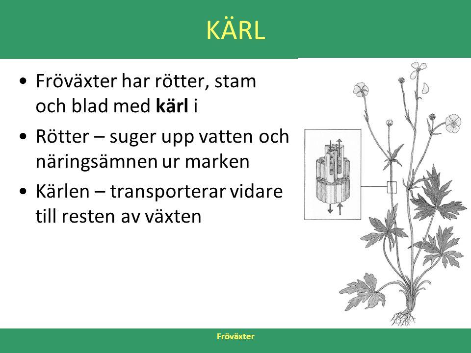 KÄRL Fröväxter har rötter, stam och blad med kärl i