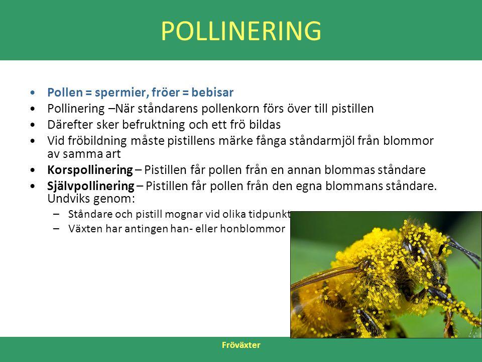 POLLINERING Pollen = spermier, fröer = bebisar