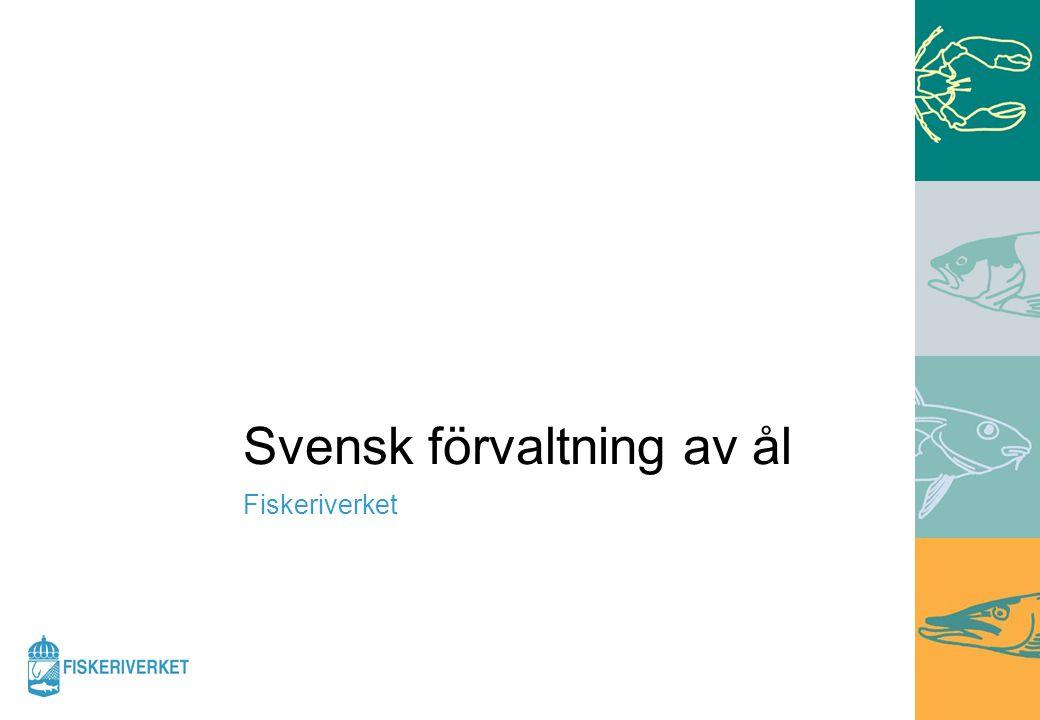 Svensk förvaltning av ål