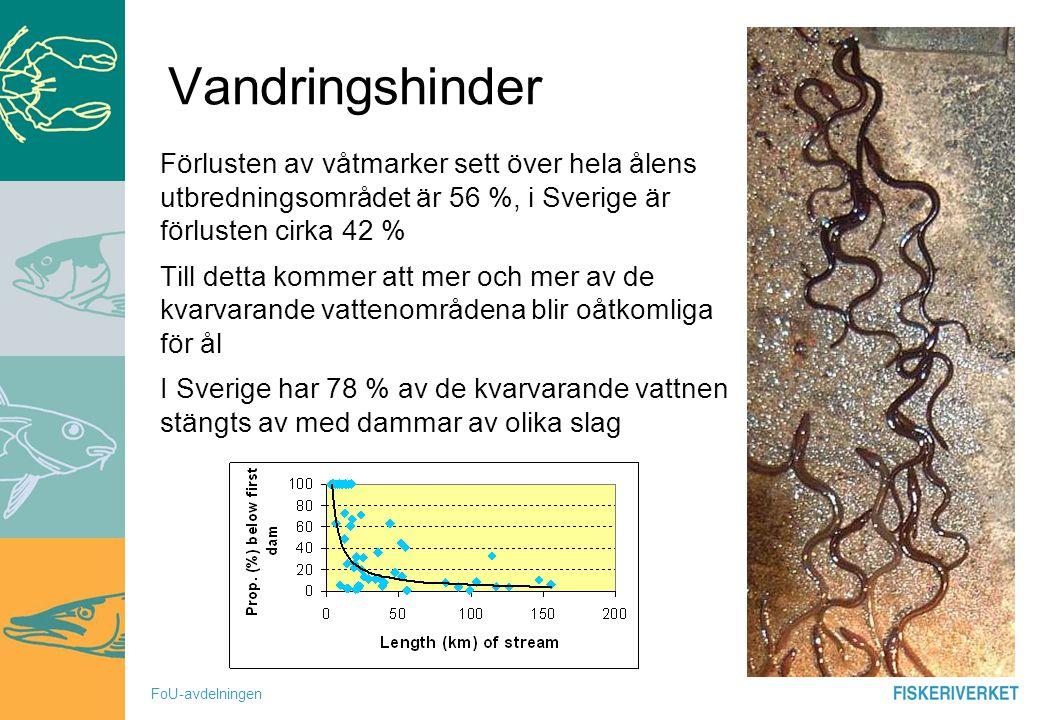 Vandringshinder Förlusten av våtmarker sett över hela ålens utbredningsområdet är 56 %, i Sverige är förlusten cirka 42 %