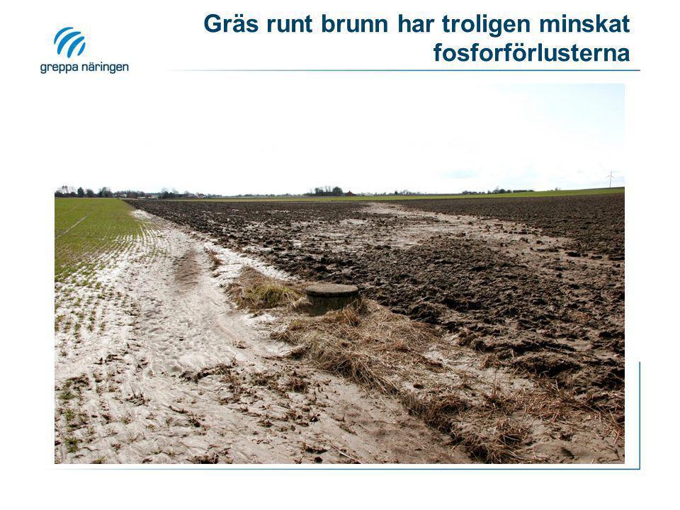 Gräs runt brunn har troligen minskat fosforförlusterna