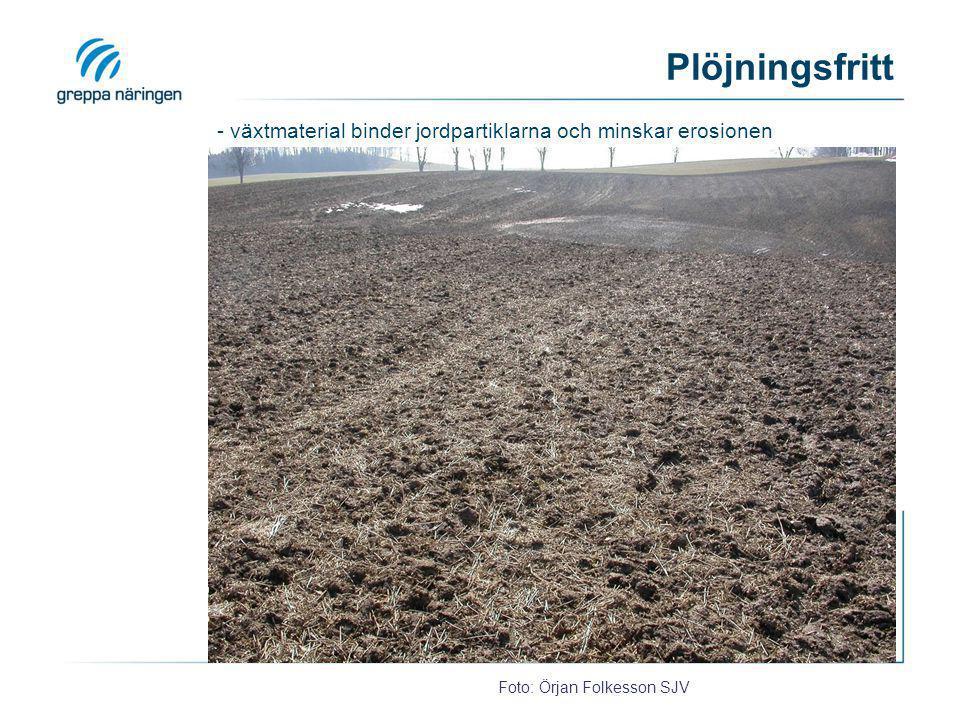 Plöjningsfritt - växtmaterial binder jordpartiklarna och minskar erosionen.