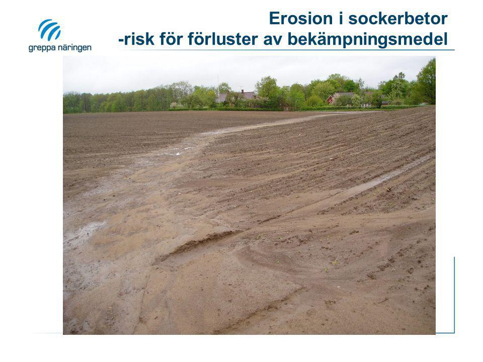 Erosion i sockerbetor -risk för förluster av bekämpningsmedel