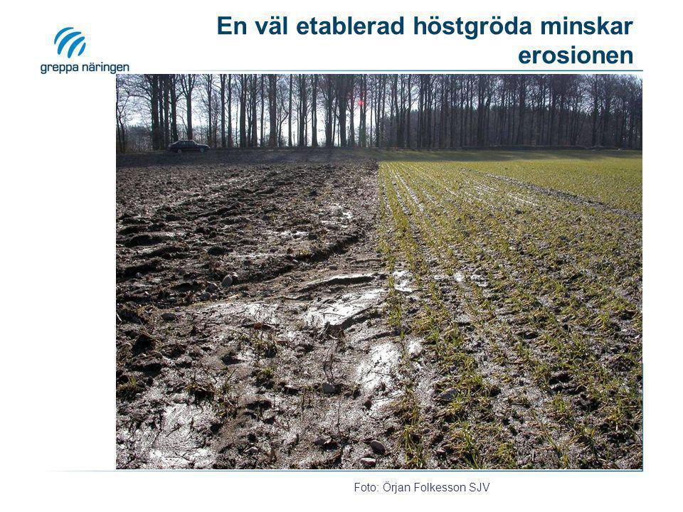 En väl etablerad höstgröda minskar erosionen