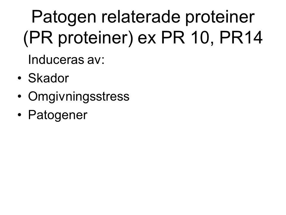 Patogen relaterade proteiner (PR proteiner) ex PR 10, PR14
