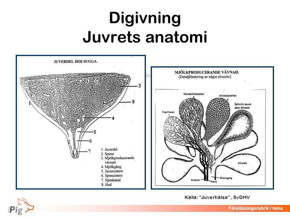 Digivning Juvrets anatomi