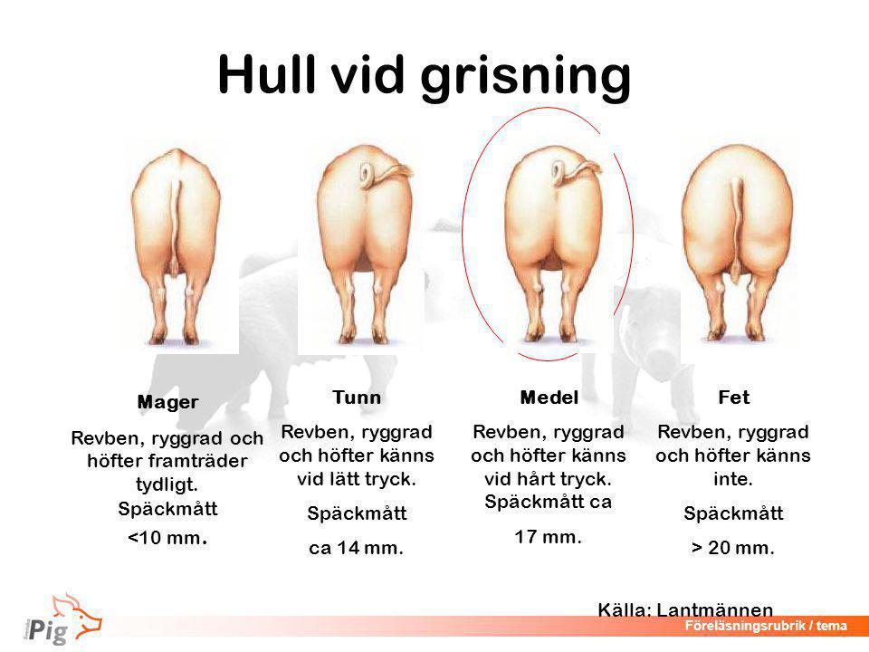 Hull vid grisning Mager Revben, ryggrad och höfter framträder tydligt.