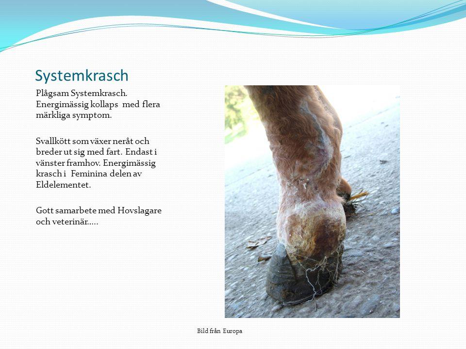 Systemkrasch Plågsam Systemkrasch. Energimässig kollaps med flera märkliga symptom.