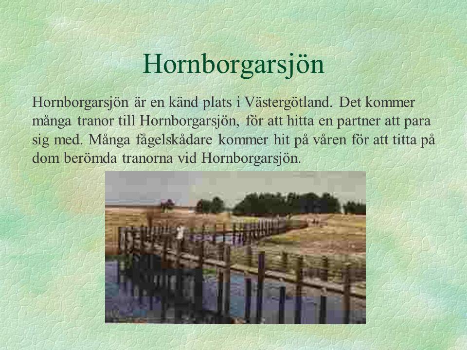 Hornborgarsjön