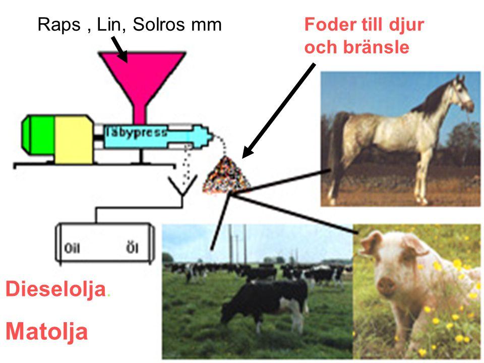 Raps , Lin, Solros mm Foder till djur och bränsle Dieselolja. Matolja