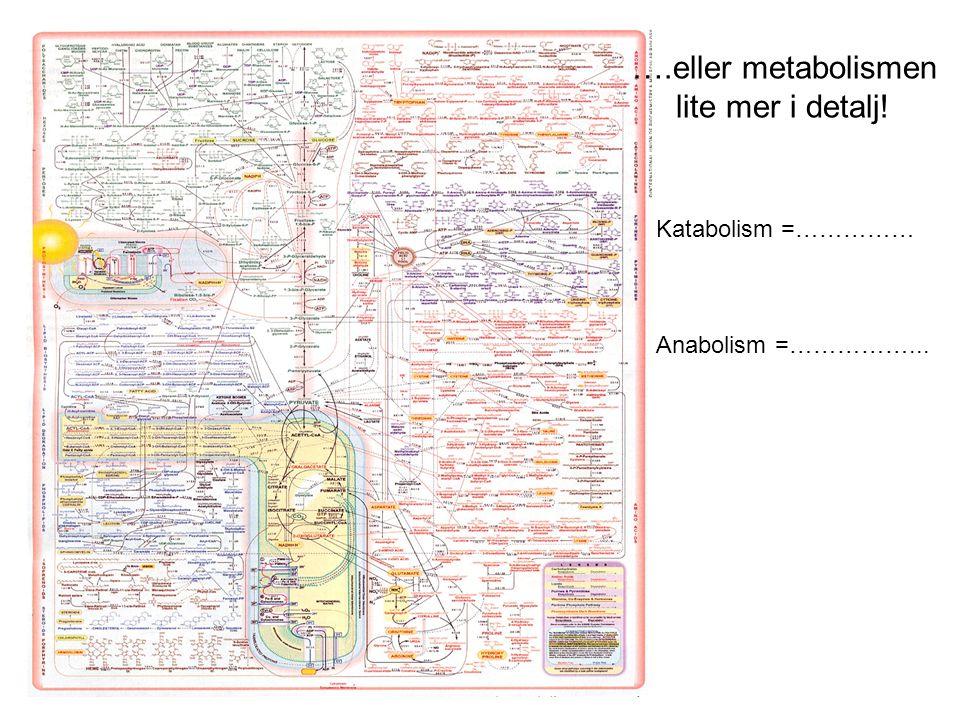 ….eller metabolismen lite mer i detalj! Katabolism =……………