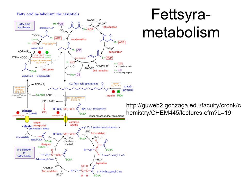 Fettsyra- metabolism http://guweb2.gonzaga.edu/faculty/cronk/chemistry/CHEM445/lectures.cfm L=19