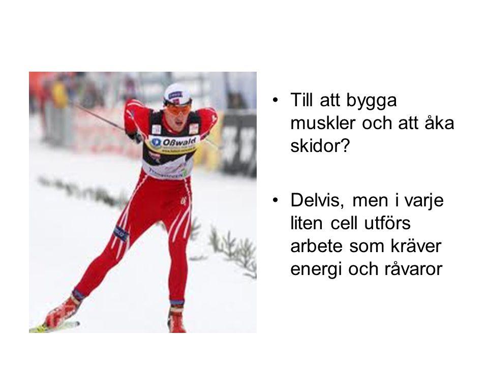 Till att bygga muskler och att åka skidor