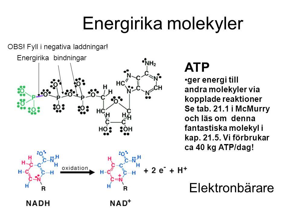 Energirika molekyler ATP Elektronbärare ger energi till